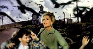 The Birds - bird attack
