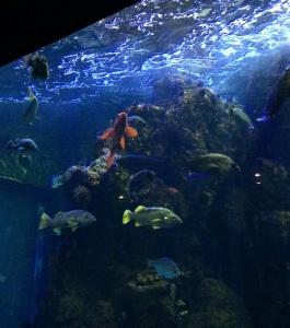 Academy of Sciences Aquarium